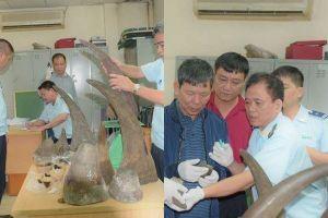 Thu giữ kiện hàng chứa nhiều sừng tê giác tại sân bay Nội Bài