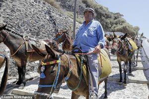 Hy Lạp chính thức cấm du khách béo phì cưỡi lừa đi dạo