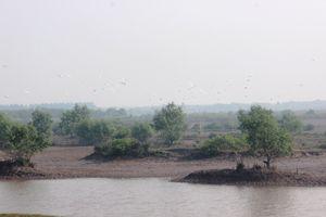 Thái Bình: Phát triển bền vững Khu bảo tồn thiên nhiên đất ngập nước Tiền Hải