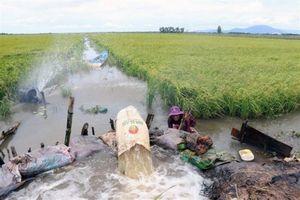 Kiên Giang: Mực nước ở các trạm nội đồng có xu hướng giảm dần