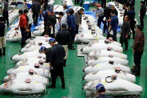 Phiên đấu giá đầu tiên tại chợ cá lớn nhất thế giới ở Nhật
