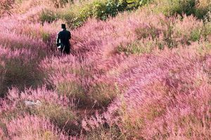 Khám phá đồi cỏ hồng ở Đà Lạt thời điểm nào đẹp nhất?