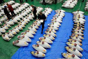 Nhật mở lại chợ cá lớn nhất thế giới tại thủ đô Tokyo