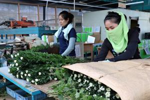 Nhật Bản có thể cho phép lao động nước ngoài cư trú dài hạn