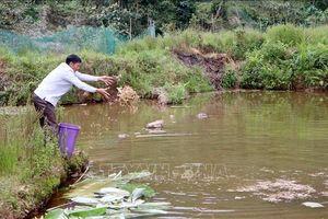 Mô hình phát triển kinh tế hiệu quả của người Mông huyện Tam Đường, Lai Châu