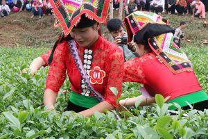 Sơn La: Công bố nhãn hiệu chứng nhận chè và khoai sọ Thuận Châu
