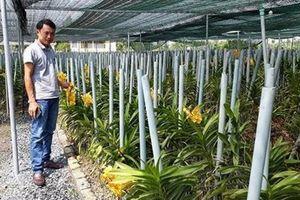 Chuyện làm VAC ở Võ Ninh