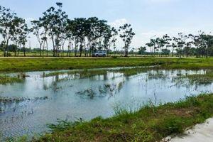 TP.HCM: Thanh tra toàn diện các dự án của Công ty Phi Long