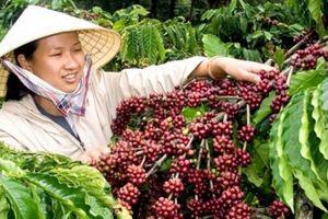 Chiến tranh thương mại Mỹ - Trung: Thủy sản lợi, cà phê ít ảnh hưởng