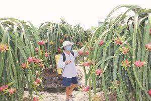 Hàng Việt còn thờ ơ với thị trường ASEAN
