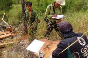 Truy tố 15 bị can khai thác gỗ quý trong Vườn Quốc gia Yok Đôn