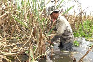 Quyết liệt giải cứu nông sản cho người dân