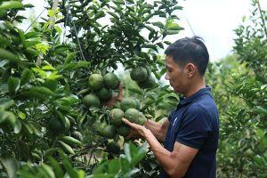 Nông sản Việt: Kết nối cung - cầu là khâu yếu nhất!