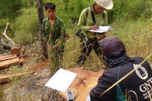 Đi lấy mật, nhóm đối tượng 'tranh thủ' chặt hạ 4 cây gỗ Hương quý hiếm