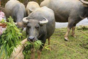 Lào Cai: Vốn Hội giúp nông dân làm giàu, tạo nhiều việc làm