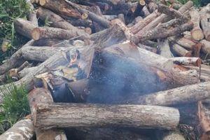 Cán bộ kiểm lâm tại Đắk Lắk bị tưới xăng đốt khi đang làm nhiệm vụ