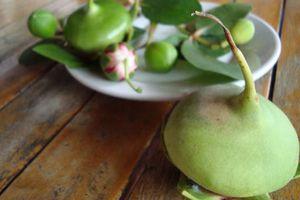 Khám phá trái bần 'nhà nghèo', đặc sản quý ở ĐBSCL