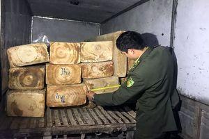 Mai phục ngày đêm, tóm gọn xe chở 15 phách gỗ pơ mu quý hiếm lên Đà Lạt