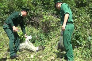 12 con rùa đất và 5 con cầy hương được trở về với thiên nhiên