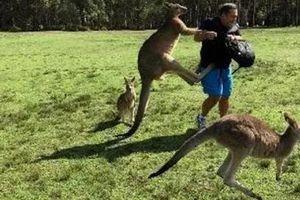 Gia đình may mắn sống sót khi bị kangaroo hung hăng tấn công