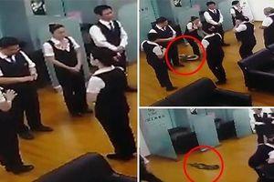 Suýt bị trăn 'khủng' rơi trúng đầu, dàn nhân viên ngân hàng hoảng loạn