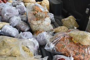 Rùng mình với hơn 80kg ruốc mốc thiu bày bán ở chợ đầu mối xứ Thanh