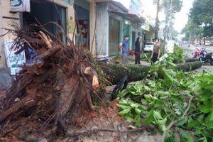 Đồng Nai: Lốc xoáy khiến nhiều ngôi nhà tốc mái, cây xanh bật gốc