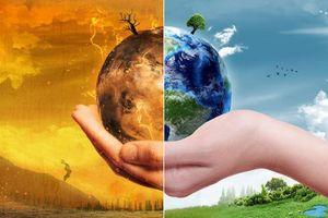 Trồng rừng, giảm lãng phí thực phẩm và giảm ăn thịt là cách tốt nhất làm 'mát' Trái Đất