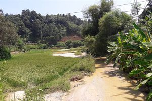 Xử phạt công ty Khai Phát Lào Cai 250 triệu đồng