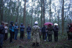Liên kết phát triển rừng trồng
