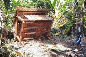 Chòi bảo vệ rừng bị phá, gỗ rừng bị cưa xẻ ngổn ngang