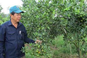 Quảng Nam: Người làm ra cả trăm tỷ, cả đời mong làm việc thiện