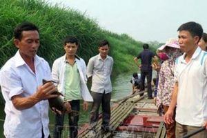 Nuôi loài 'ngũ quý' dưới sông Lô, sông Gâm, bán 450-500 ngàn/kg