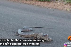 Xem rắn hổ mang cực độc truy sát thằn lằn