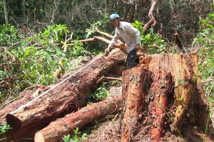 Họp khẩn để truy tìm kẻ phá rừng trong khu bảo tồn thiên nhiên Tà Cú