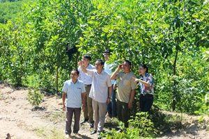 Nhiều mô hình 'cây thoát nghèo' cho đồng bào dân tộc Mông ở Nghệ An