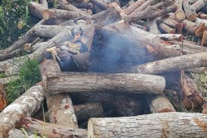 Cán bộ kiểm lâm bị tưới xăng đốt khi kiểm tra gỗ lậu