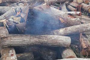 'Lâm tặc' chửi bới, tạt xăng rồi châm lửa đốt cán bộ kiểm lâm bỏng nặng