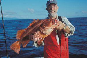 Chân dung loài cá xấu xí, sống thọ tới 200 năm