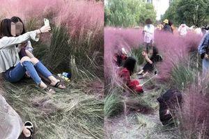 Nhóm bạn trẻ phá tan hoang cánh đồng cỏ hồng tuyệt đẹp để... tìm góc sống ảo