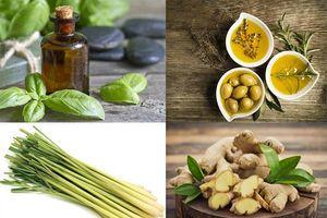 Những tinh dầu thiên nhiên giúp người bệnh thoát khỏi các cơn đau do gút