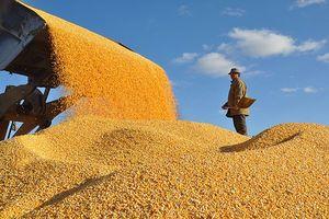 Thế giới có thể không còn nạn đói vào năm 2030