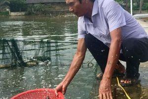 U70 có 'biệt tài' ươm cá giống, bán cả sang Lào, thu tiền tỷ/năm