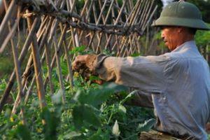 Gia Lâm chi 78 tỷ nâng cấp kênh mương, chuyển đổi cây trồng