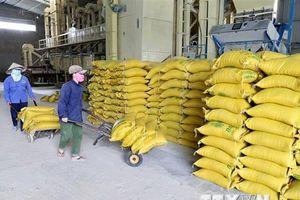 Chiến tranh thương mại Mỹ-Trung: Doanh nghiệp gạo không chủ quan