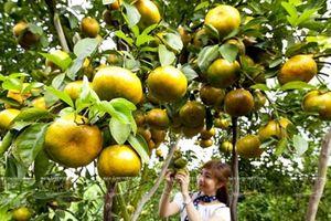 Tour trải nghiệm miệt vườn Đồng bằng sông Cửu Long