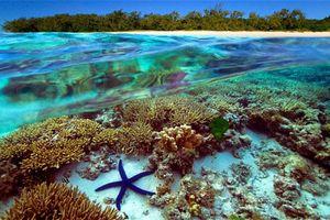 'Rừng già' dưới đáy đại dương