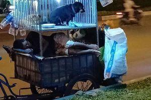 Nghẹn ngào hình ảnh 2 chú chó ngoan ngoãn bên cạnh chủ trên chiếc xe ve chai ấm áp tình thương sau những giờ mưu sinh vất vả