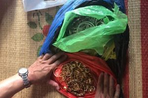 Ninh Bình: Bắt giữ 2 đối tượng trộm hơn 200 lượng vàng