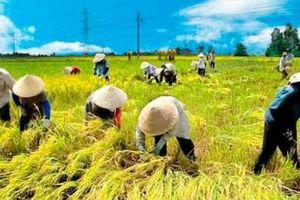 Đến năm 2030, thế giới có thể không còn nạn đói